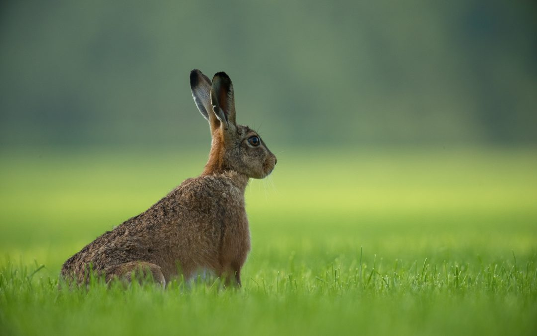 Photo of rabbit in field