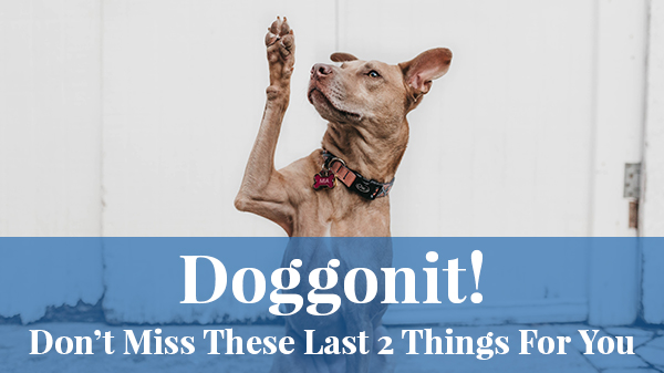 Doggonit! Don't miss these last 2 things for you