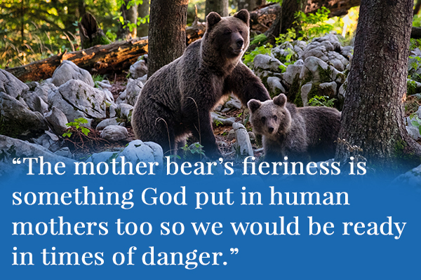 The mother bear's fieriness is something God put in human mothers too so we would be ready for danger
